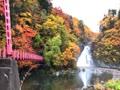 秋田県由利本荘市の法体の滝の紅葉🍁です。小雨が降る中行ってきてキレイでした☺️