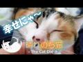 猫だって甘えたい時もある 13 - cat is affectionate -